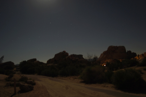 Camping under a Joshua Tree moon