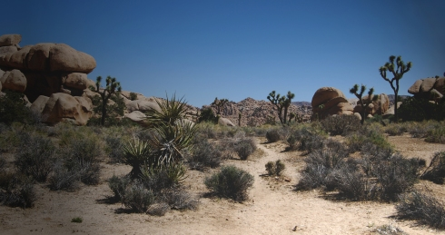 Venturing into the Joshua Tree wonderland