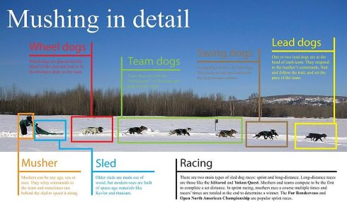Roles of a dog sled team